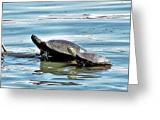 Turtles - Mother And Child Greeting Card