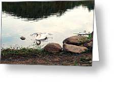 Twilight Swan Greeting Card