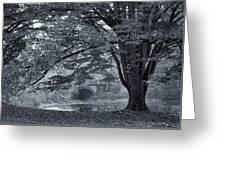 Twin Lake Mist Greeting Card