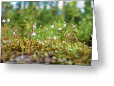 Twinflower Forest Greeting Card