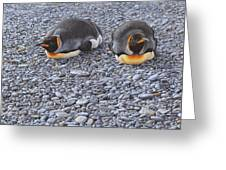 Two King Penguins By Alan M Hunt Greeting Card