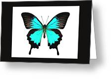 Ulysses Butterfly White Background Drawing by Joan Stratton