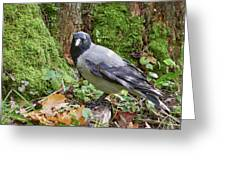 Under The Oak Tree. Hooded Crow Greeting Card