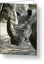 Up Close Look At The Face Of A Rhinoceros Greeting Card