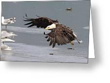 Valdez Eagle One Greeting Card