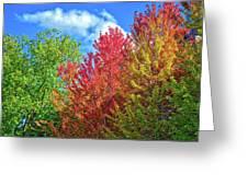 Vibrant Autumn Hues At Cornell University - Ithaca, New York Greeting Card