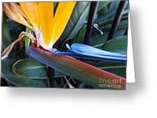 Vibrant Bird Of Paradise #2 Greeting Card