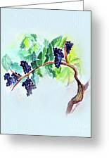 Vine And Branch Greeting Card