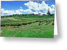 Vineyard, Whangarei, Northland, New Greeting Card