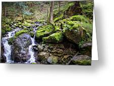 Vivid Green In The Black Forest Greeting Card
