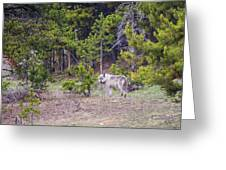 W755 Greeting Card by Joshua Able's Wildlife