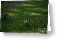 Waddling Ducklings Greeting Card
