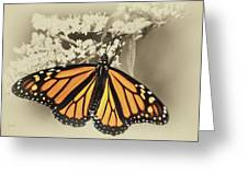 Wandering Migrant Butterfly Greeting Card
