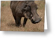 Warm And Fuzzy Warthog Greeting Card by Mary Lee Dereske