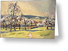 Warm Spring Light In The Fruit Orchard Greeting Card