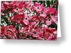 Washington State Magnolia Greeting Card by Mae Wertz