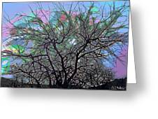 Wasteway Willow 08 Greeting Card