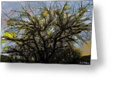 Wasteway Willow 11 Greeting Card
