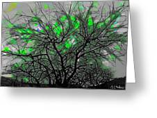 Wasteway Willow 12 Greeting Card