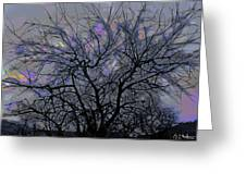 Wasteway Willow 15 Greeting Card