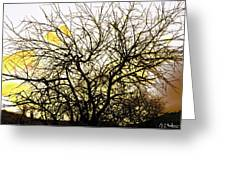 Wasteway Willow 18 Greeting Card