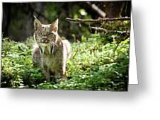 Watchful Mama Lynx Greeting Card by Tim Newton