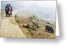 Water Buffalo And Motorcyclists On The Road In Sa Pa, Vietnam by Madeline  Ellis