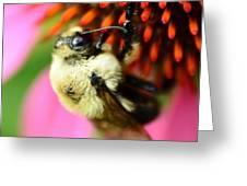 Water Drop On Bee Eye Greeting Card
