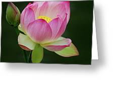 Water Lily In The Pond Greeting Card by Howard Bagley
