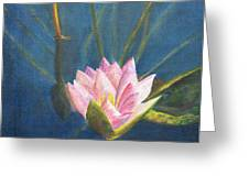 Water Lily Greeting Card by Nancy Strahinic