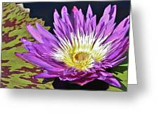 Water Lily On The Pond Greeting Card