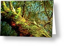 Water Log Greeting Card