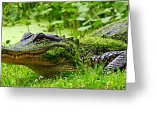 Wearin O' The Green Greeting Card