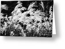 Weed Grass Black And White Greeting Card