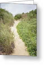 Wellfleet Sand Dunes Greeting Card