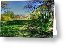 Wentworth Daffodils Greeting Card by Wayne Marshall Chase