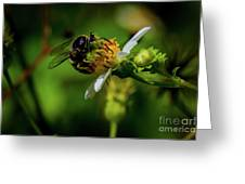 Western Sand Wasp Greeting Card