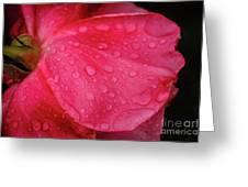 Wet Rose Petal Greeting Card