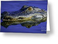 Wetlands Gator Close-up Greeting Card by Tom Claud