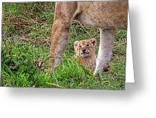 What Could Be Cuter Than A Baby Lion Cub? Greeting Card