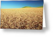 Wheat And Mounds Greeting Card