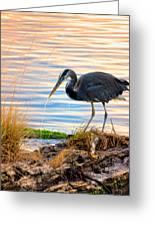 Wheeler Oregon - Great Blue Heron Greeting Card