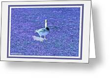Where's Mine - The Blue Goose Greeting Card