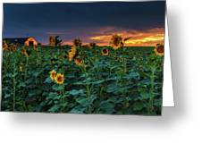 Whispers Of Summer Greeting Card by John De Bord