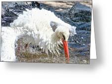 White Stork Fishing Greeting Card