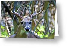 White Tailed Buck Portrait Greeting Card