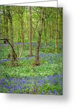 Wild Garlic And Bluebells Greeting Card