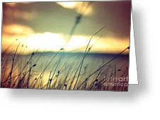 Wild Grasses At Golden Summer Sunset Greeting Card