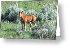 Wild Horse Foal Greeting Card