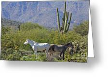 Wild Horses Tonto National Forest Greeting Card